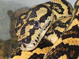 Gatunki węży