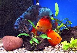 Niebezpieczne ryby