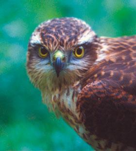 Ptaki, które występują w Polsce