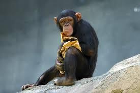 Człowiek i małpa