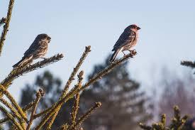 Rodzaje ptaków