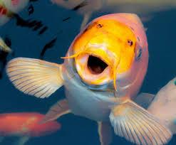 Ogólnie o rybach