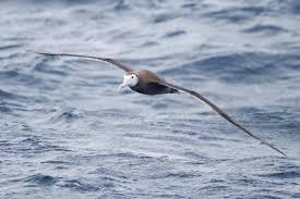 Występowanie ptaków i ewolucja